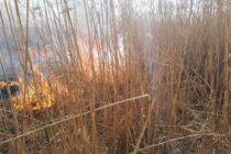 Pompierii romașcani solicitați de mai multe ori din cauza incendiilor de vegetație provocate intenționat