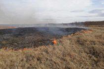 Incendiu de vegetație extins pe 5 hectare la Grumăzești