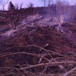 Incendiu vegetatie uscata Pipirig (1)