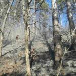Incendiu de vegetatie Poiana Teiului (1)