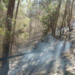 Incendiu de vegetatie Poiana Teiului (2)