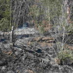 Incendiu de vegetatie Poiana Teiului (3)