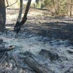 Incendiu de vegetatie Poiana Teiului (4)