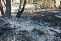 Incendiu de vegetație uscată în comuna Poiana Teiului