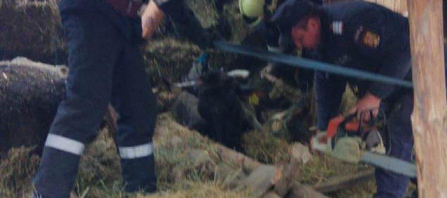 Mai multe animale scoase de pompieri de sub dărâmăturile unui adăpost