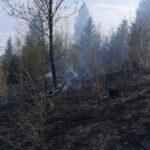 incendiu vegetatie Borca