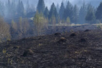 Incendiu de vegetație extins pe 50 de hectare la Borca