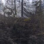 incendiu vegetatie Borca 3