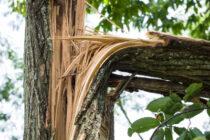 Copac căzut peste un bărbat în curtea casei. Au intervenit pompierii.