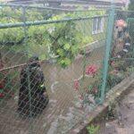 gospodarii inundate in Neamt (3)