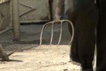 Un bărbat din Făurei a desfigurat cu furca un consătean