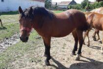 3 cai din Neamț furați de un tânăr din Bacău