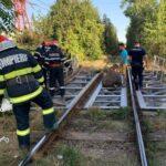 bovina salvata de pe calea ferata (1)