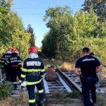 bovina salvata de pe calea ferata (3)