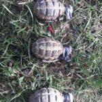 grenade descoperite in fantana tibucani (1)