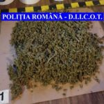 cannabis confiscat DIICOT Neamt