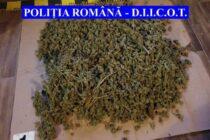4 persoane reținute pentru trafic de droguri, peste 3 kg de cannabis confiscate de polițiști
