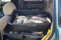 A încercat să vândă peste 100 kg de pește fără acte