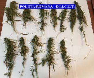 Dealer de droguri prins de polițiștii nemțeni