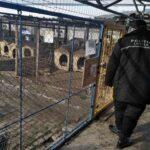 politia locala in cautarea stapanilor de caini (1)