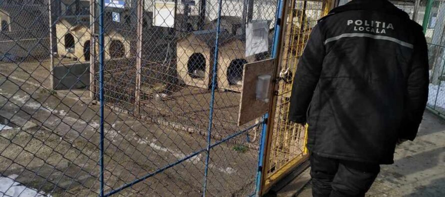 Polițiștii locali în căutarea stăpânilor de câini lăsați liberi pe stradă