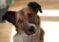 Comisia pentru Protecția Animalelor înființată la Primăria Piatra Neamț