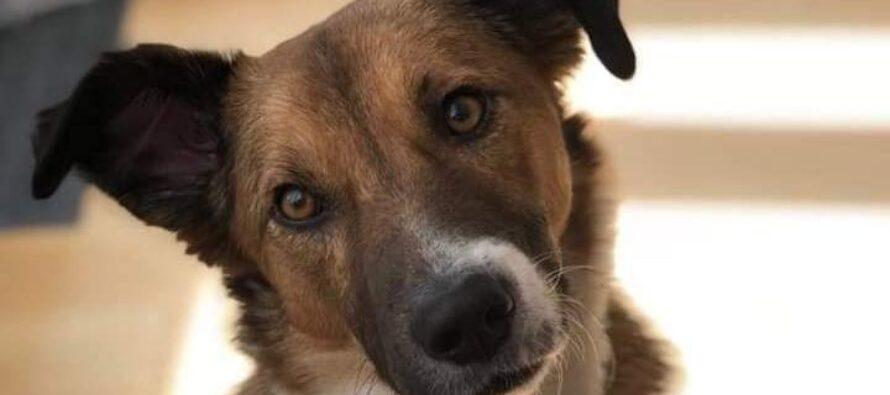 Modificări legislative privind protecția animalelor. Ce pot face polițiștii.