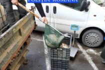 Acțiune împotriva braconajului piscicol. Bărbat prins cu aproape 120 kg de pește fără acte.