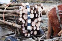 Bărbat prins de polițiști în timp ce fura lemne din pădure cu căruța