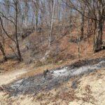 incendii de vegetatie litiera borlesti (1)