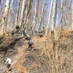 incendii de vegetatie litiera borlesti (2)