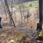 incendii de vegetatie litiera borlesti (3)