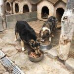 politia animalelor la caini (1)