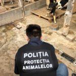politia animalelor la caini (3)