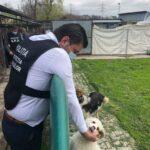 politia animalelor la adapostul caini (4)
