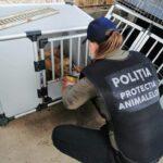 politia animalelor la caini (5)
