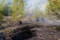 Incendiu de vegetație în localitatea Oanțu stins cu greu de pompieri