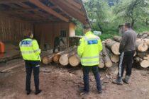 Două societăți comerciale din Pipirig prinse cu 24 mc de lemn fără avize