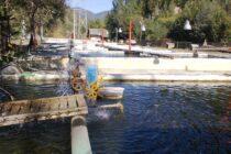 Incident grav la Tașca: apa a fost poluată cu 5 tone de amoniac. Toți peștii din păstrăvăriile Cheița au murit.