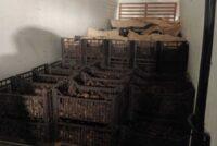 1.200 de kg de trufe nergre fără acte legale descoperite în autoturismul unui cetățean italian