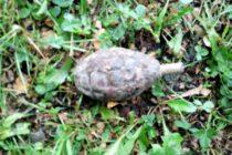 Grenadă neexplodată descoperită într-un pârâu din comuna Pipirig