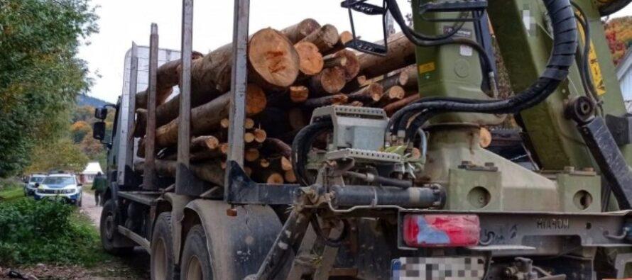 3 tineri reținuți după ce au fost prinși cu lemne fără acte